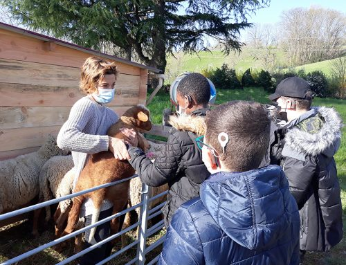 Des moutons à l'INJS de Chambéry